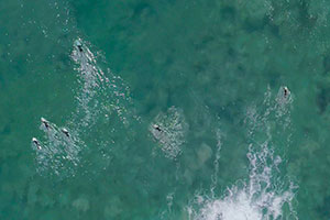 Surfers in the ocean - Pepperdine Magazine