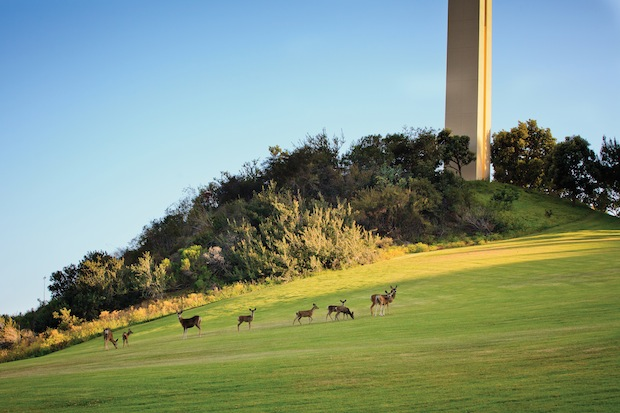 Deer Spotting - Pepperdine Magazine